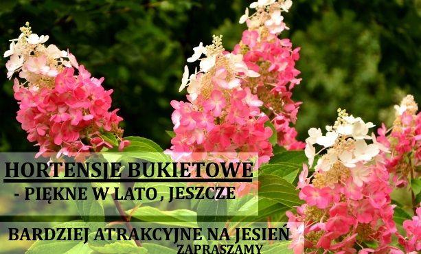 Centrum Ogrodnicze Nowe Ogrody Gdańsk Szkółka Roślin